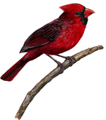 Load image into Gallery viewer, Cardinal Wall Decal