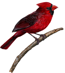 Cardinal Wall Decal