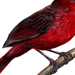 Load image into Gallery viewer, closeup of cardinal wall decal