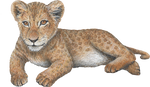 Load image into Gallery viewer, Big Cat Cubs Wall Decals Collection