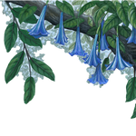 Load image into Gallery viewer, Blue Flower Vine Border Wall Decal (45 in. x 14 in.)