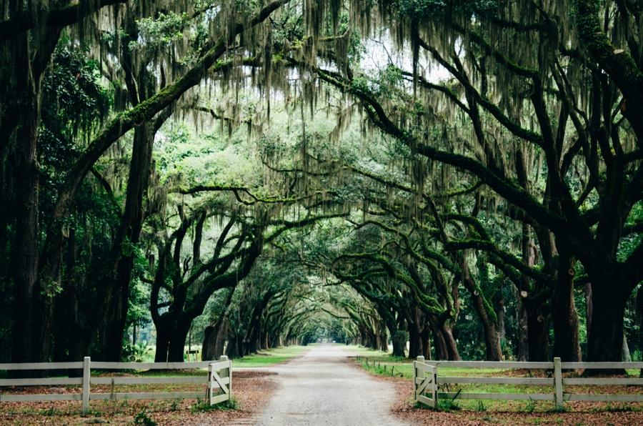 A beautiful pathway led by a canopy of trees