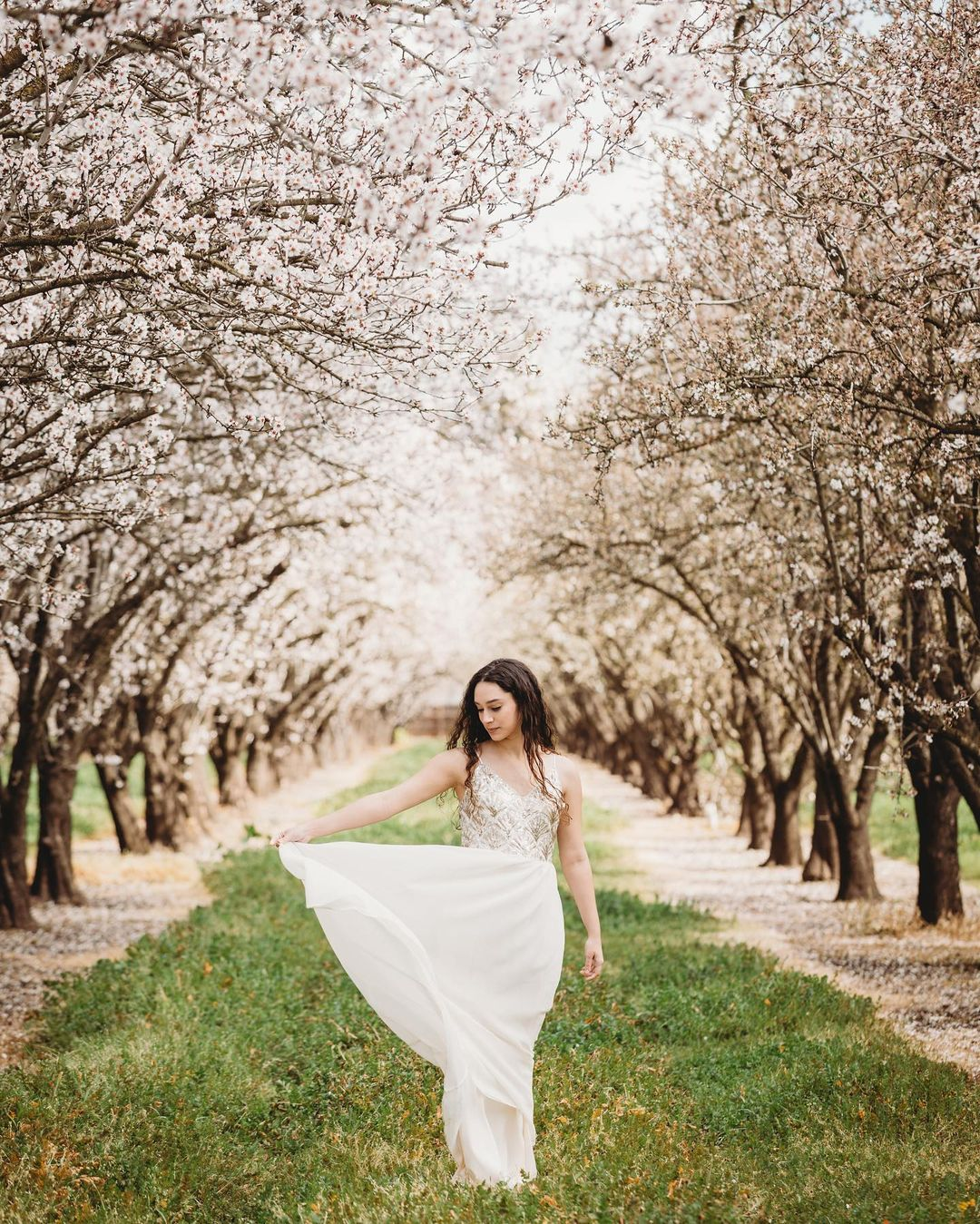 A bride posing while swaying her dress in a pathway outlined by cherry blossom trees