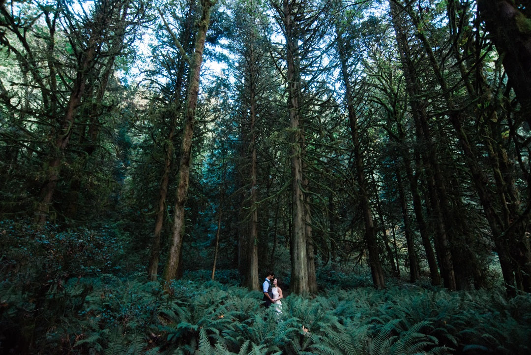 Couples posing in the middle of a forest
