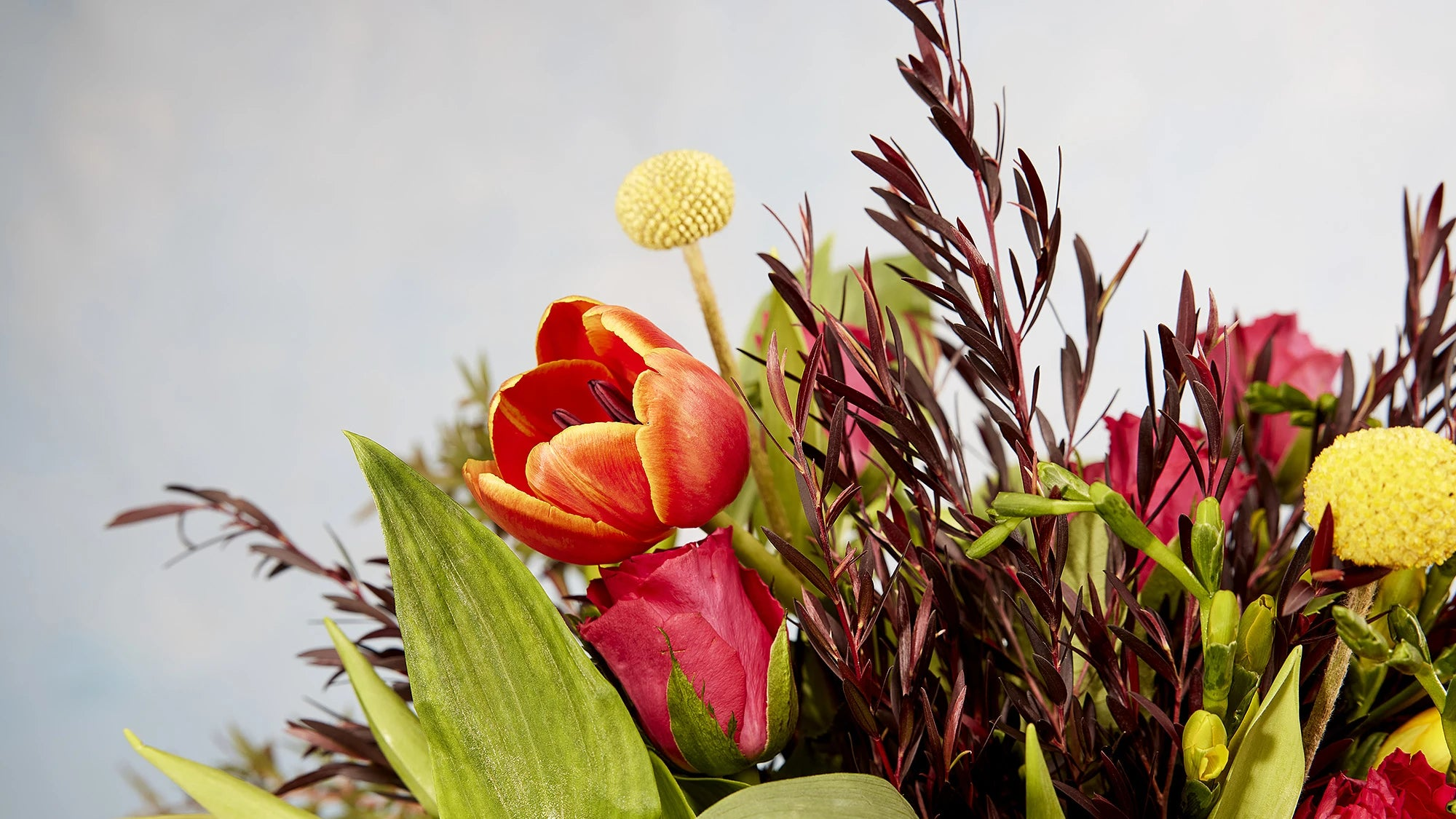 Which flowers are best in each season