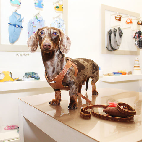 DACHSHUNDS. dISCOVER THE PUPAKIOTTI FITTING