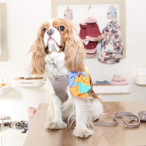 CAVALIER KING. dISCOVER THE PUPAKIOTTI FITTING