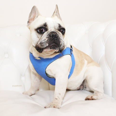 FRENCH BULLDOG. dISCOVER THE PUPAKIOTTI FITTING