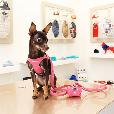 PINSCHER. dISCOVER THE PUPAKIOTTI FITTING