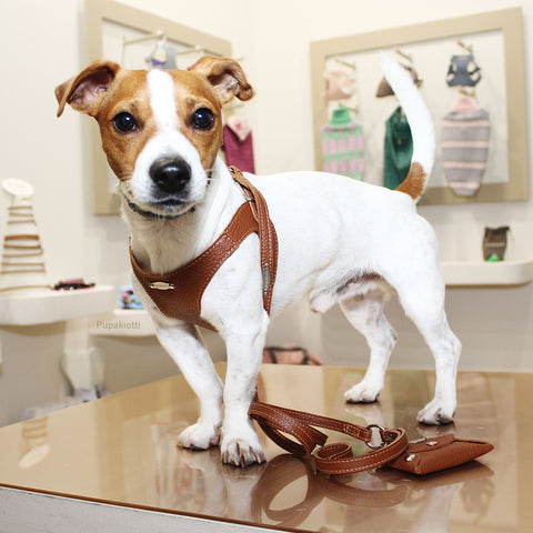 JACK RUSSEL. dISCOVER THE PUPAKIOTTI FITTING