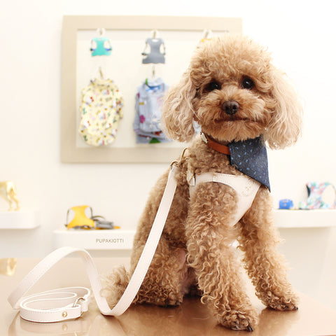 pOODLES. dISCOVER THE PUPAKIOTTI FITTING