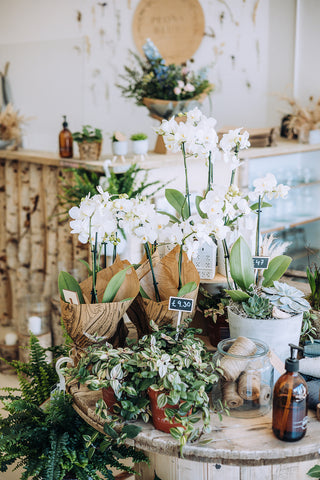 Florist shop in Bournemouth selling flowers, plants, gifts and homewares