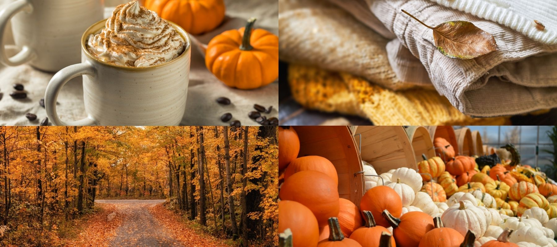 Four Panels of Different Fall Photos: Pumpkin Spiced Late, Fall Clothes, Fall Leaves, and Pumpkins