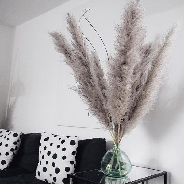 Best Quality Pampas Grass Branch - Set of 15