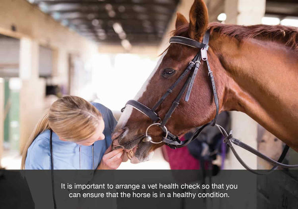 EQU Streamz image for blog. It is important to arrange a vet health check so that you  can ensure that the horse is in a healthy condition.
