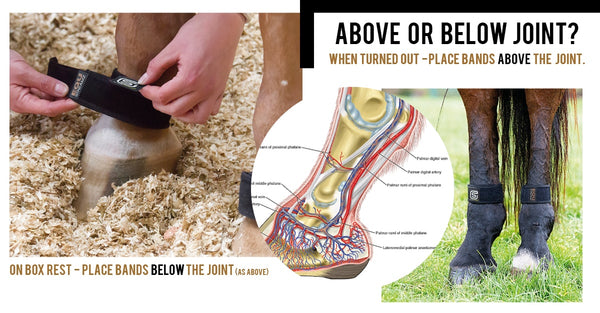 Where to fit the EQU Streamz bands on what leg of the horse tips and tricks instructions for new EQU Streamz customers and their horses