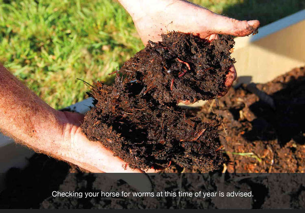 Checking your horse for worms at this time of year is advised. EQU StreamZ blog image.