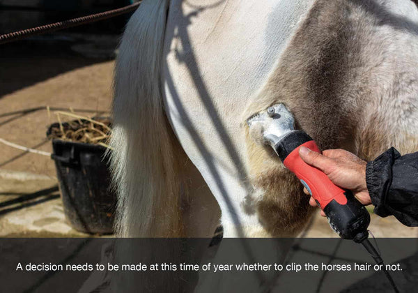 A decision needs to be made at th ebeginning of autumn or fall as to whether to clip your horses hair or not. EQU Streamz blog image.