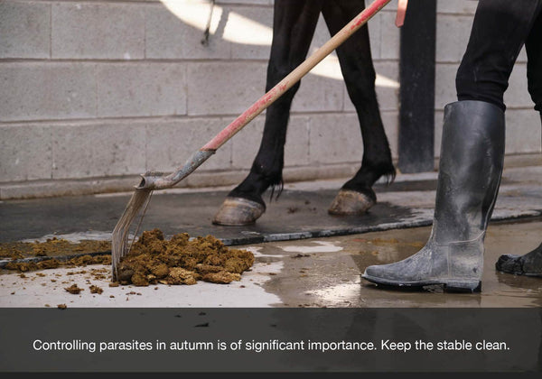 EQU Streamz look after your horse this autumn or fall image. Cleaning your stable is vital to keep parasites at bay.