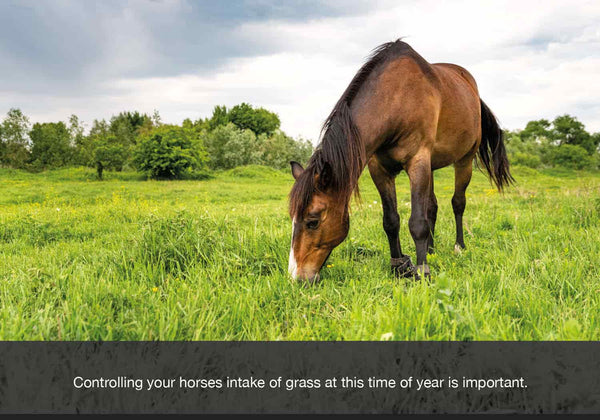 Controlling your horses intake of grass in autumn or fall is vital as over eating the grass at this time of year can be detrimental