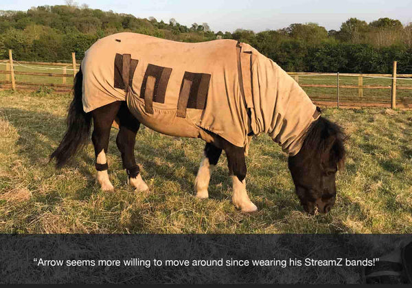 EQU Streamz feedback from horseworld trust on arrow the horse who has previous issues around laminitis and arthritis