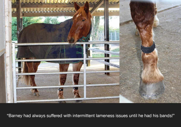 EQU Streamz advanced magnetic band feedback from horseworld trust on barney the horse who has had intermittent lameness issues