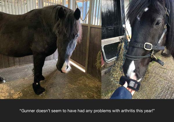 Gunner feedback from horseworld trust on how equ streamz advanced magnetic bands have helped him