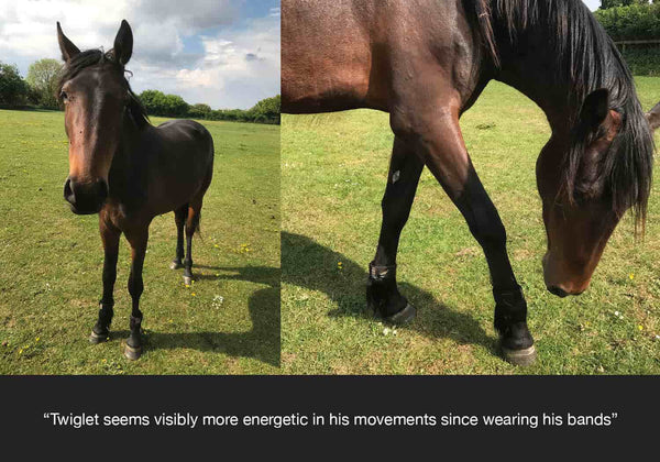 Twiglet feedback on equ streamz and how they have helped his stiffness and arthritis