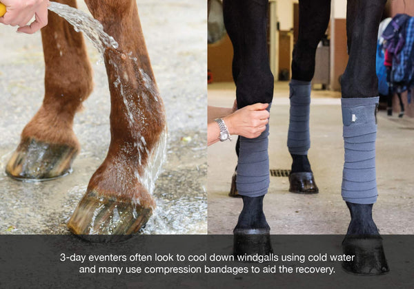 EQU Streamz windgalls blog post mcnally endorsement for 3day eventers using advanced magnetic therapy on their horses