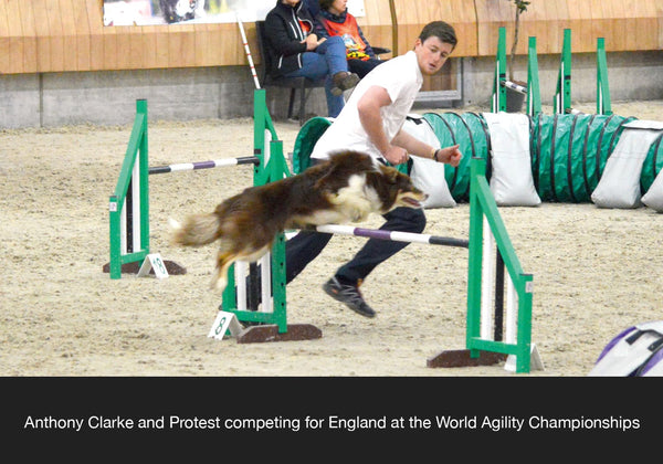 Anthony Clarke International Agility Judge, Team GB competitor and Trainer