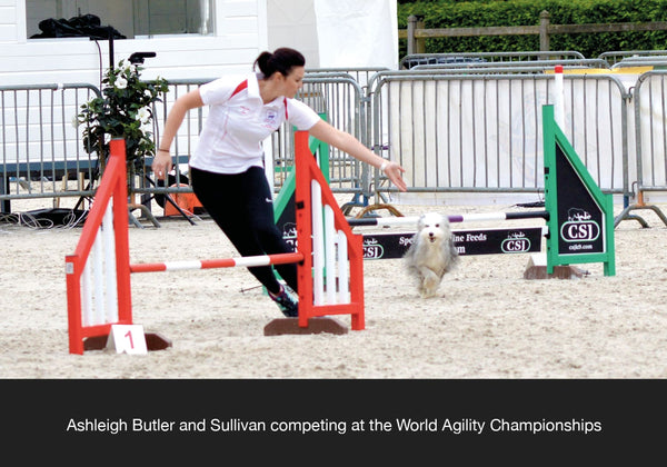 Ashleigh Butler and Sullivan competing at WAO world agility open in dog streamz magnetic dog collar