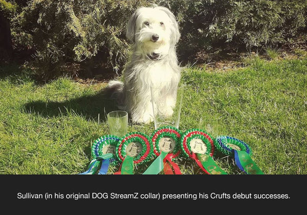 Ashleigh Butler DOG StreamZ endorsement for recovery after dog agility using dog streamz advanced magnetic dog collar