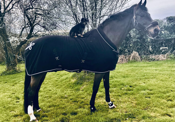 Carolyn Mellor leaves an EQU StreamZ review, part of the International Dressage Team Ireland High Performance Squad and uses Streamz advanced magnetic horse bands