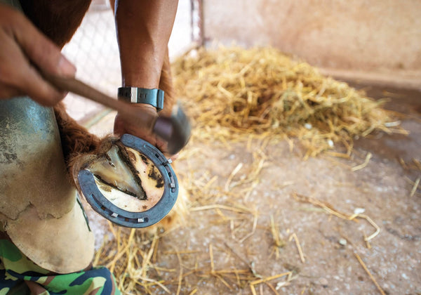 EQU Streamz Advanced Magnetic horse bands used to help Navicular in horses  blog page, guest post titled Your '3-Step' plan to treating Navicular Syndrome in horses from firsthand experience using farrier, vet medicine and equ streamz and pure feed joint supplement