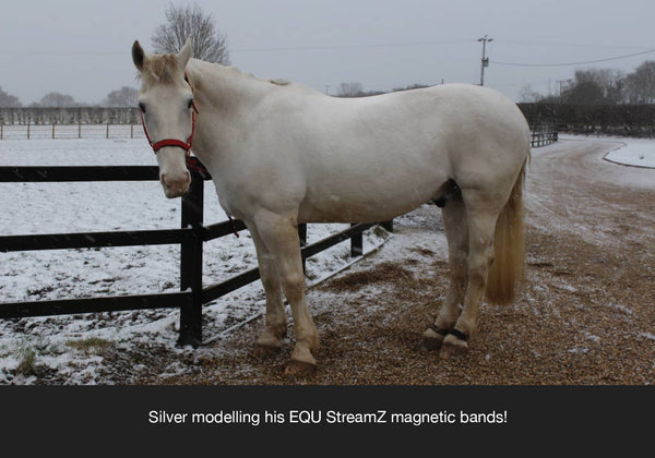 I just wanted to thank you so much for the wonderful magnetic bands that help my horse Silver, who needs a quiet life and my aim is to keep him sound. I have noticed a marked improvement in his ease of getting up from lying down and general mobility since he has worn his StreamZ advanced magnetic bands. We continue to hack gently at he walks and has a little trot each day to keep supple. He is generally a very happy horse and StreamZ unique approach has a part to play in this