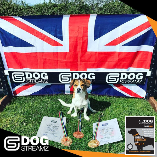 Sam winning medals dog agility crufts world champion dog streamz magnetic collars image stacey irwin endorsement