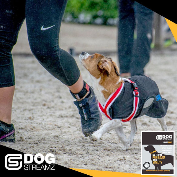 Stacey Irwin wearing a YOU StreamZ magnetic pain relief ankle band and the agility world championships