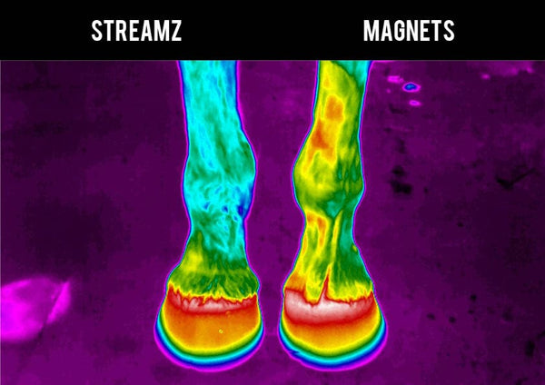 Thermal Imagining study EQU Streamz versus traditional magnetic technology no heat create suitable for 24/7 use and immediately after exercise image 1