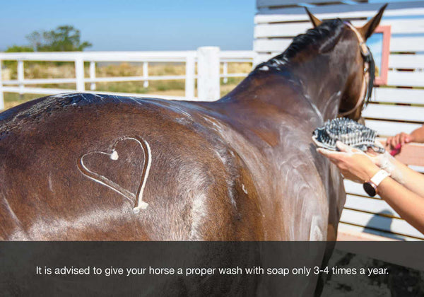 EQU Streamz autumn and fall health checklist blog image. Wash your horse no more than 4 times a year is advised.