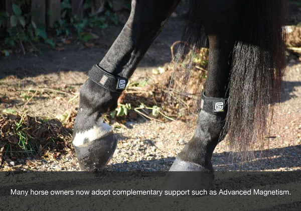 EQU Streamz blog image. Using advanced magnetic horse bands provides a complementary support option to horses in fall or autumn.