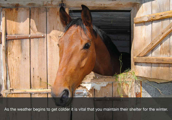 EQU Streamz autumn and fall checklist image. It is vital that shelter is provided to horses and maintaining this in early autumn is important