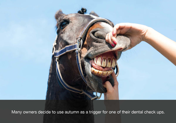 Many use autumn or fall as a trigger to book their horse in to see their dentist. EQU Streamz blog image.