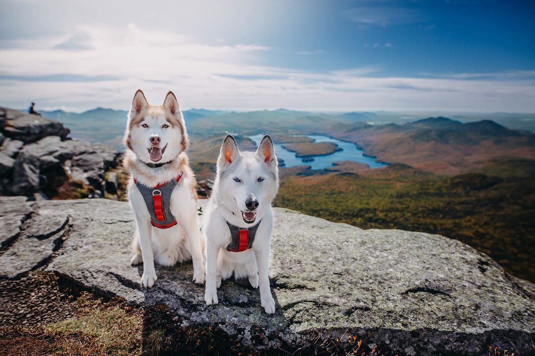 journey-air-dog-harness