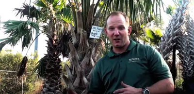 How To Plant A Palm Tree | Taylor's Quality Landscape Supply & Nursery