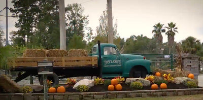 Taylor's Quality Landscape Supply in Bluffton, SC, Beaufort, SC and Pooler, GA | Taylor's Quality Landscape Supply