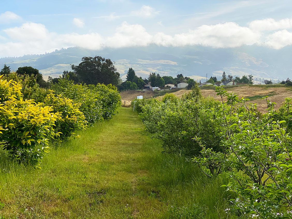 Birdsong Orchards