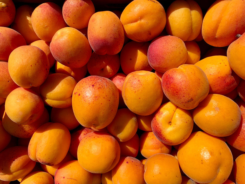 Puget Gold Apricots
