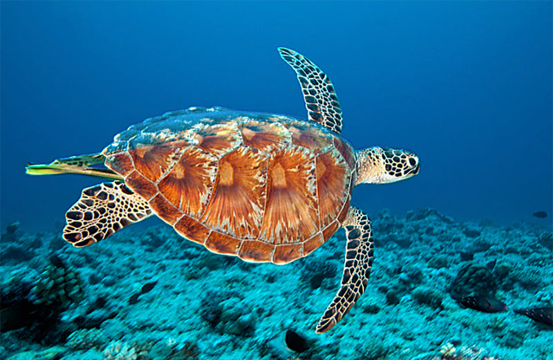 7 Endangered Marine Species and How To Raise Awareness