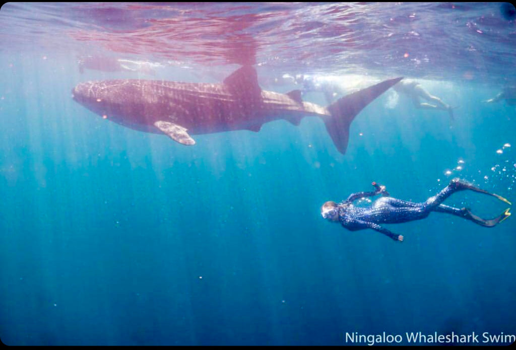 The Whale Shark Obsession.