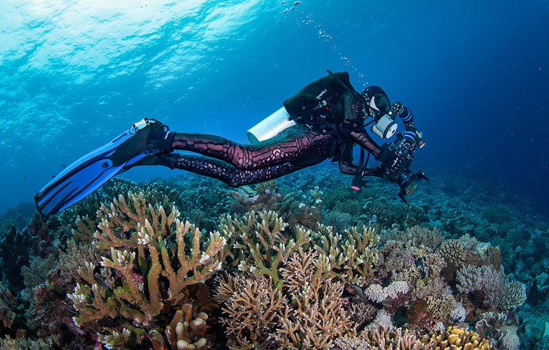 slipins-scuba-diving-coral-reefs-bucket-list